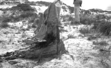 Showing wreckage of the American schooner - ribs lined up